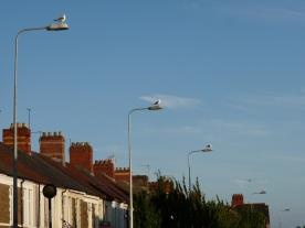 lampseagulls